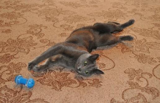 кошка с клубком фото