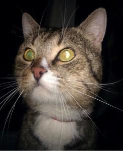 эмоции кошки
