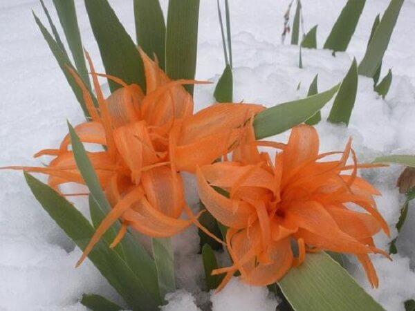 Как вырезать цветы из моркови