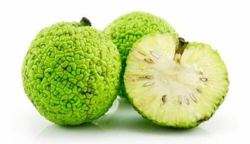 Адамово яблоко — применяем его для лечения суставов