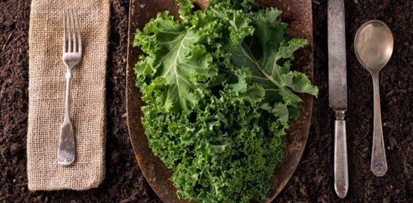 Кейла – необыкновенная капуста для нашего здоровья и долголетия