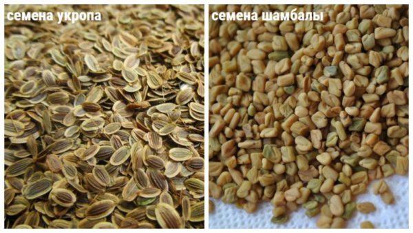 семена укропа и шамбалы