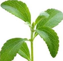 Применение стевии — рецепты из «сладкой травы» стевии