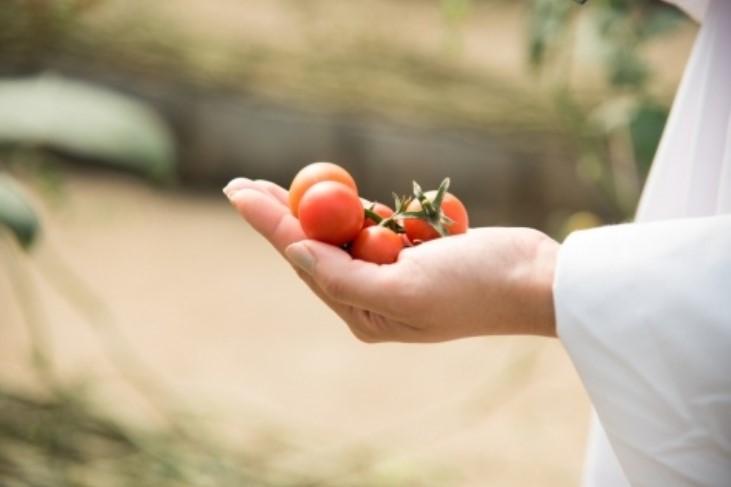 Могут ли томаты принести вред
