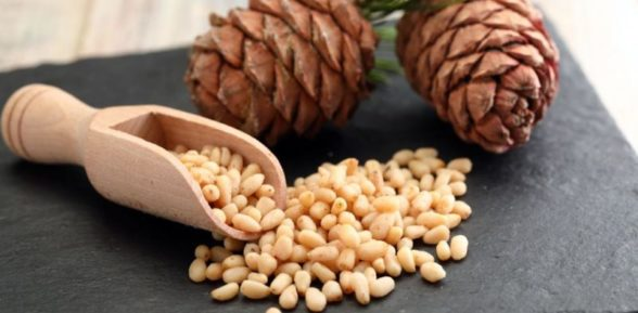 Чем полезны кедровые орешки?