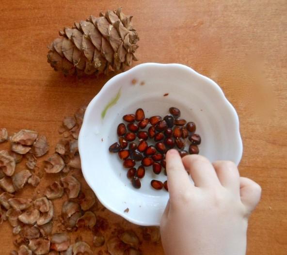 Кедровые орехи детям