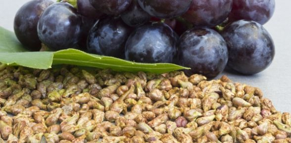 Виноградные косточки и целебные свойства красного вина